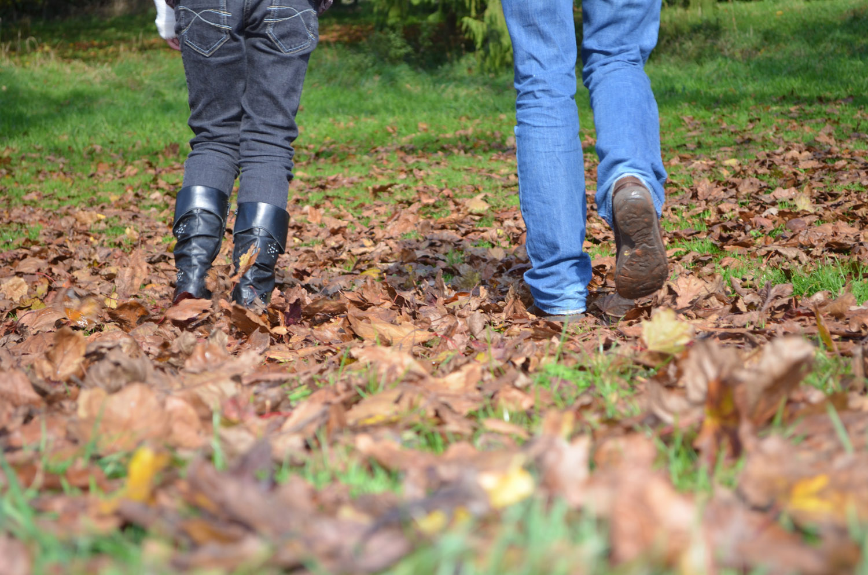 Cockington Park, Torquay, in the autumn