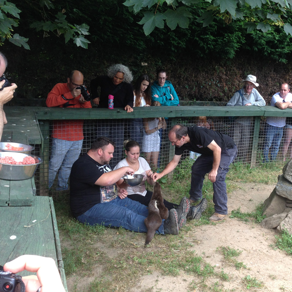 Dartmoor Otters feeding experience