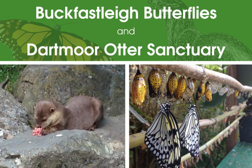 Buckfastleigh Butterflies and Dartmoor Otter Sanctuary